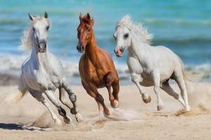 Drei kraftvolle Pferde in braun und weiß
