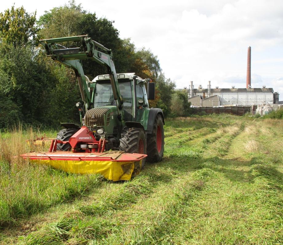 Graspapier Ernte von der Wiese der Papierfabrik Meldorf für Nature-Liner