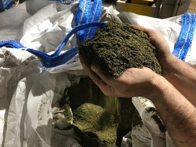 Hände greifen in loses Gras Graspapier Nature-Liner Papierfabrik Meldorf